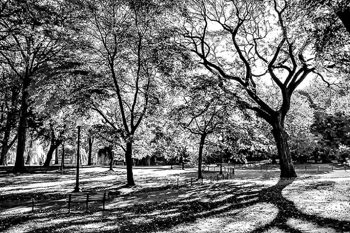 Shadows fill the ground in the Boston Common